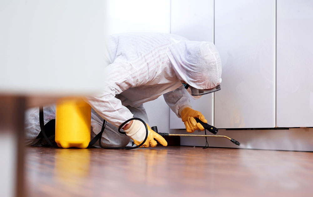 4 Benefits of Hiring a Pest control Company – CatCubed